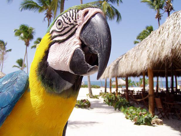 На недельку в Доминикану !