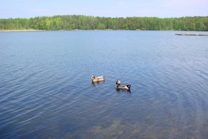 рыбалка на озере алабуга челябинская область. алабуга карта